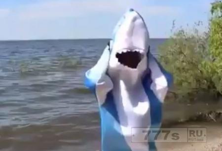 Все влюбились в танцы Shark-Ira
