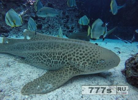 У акулы произошло непорочное зачатие, один из акуленков будет Мессия