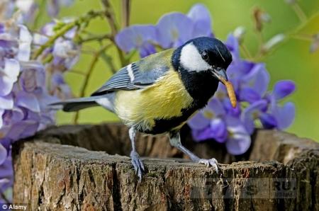 Почему птицы в городе умирают раньше, чем те, которые живут в деревне