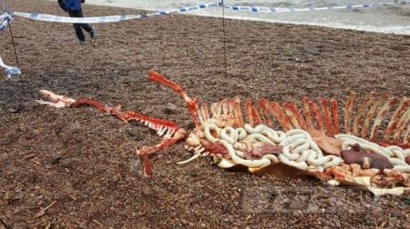 Последние новости: Лох-Несское чудовище «найдено мертвым»