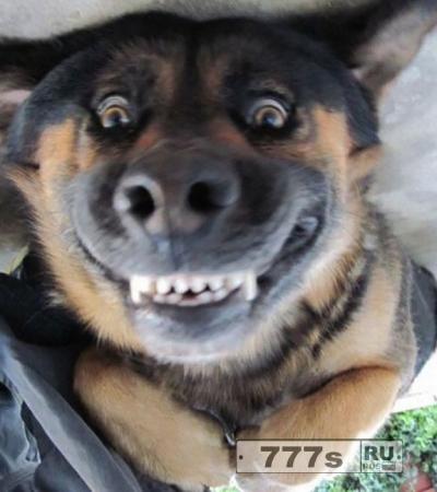 Японский Спа-центр предлагает «экзорцизм» для вашей собаки