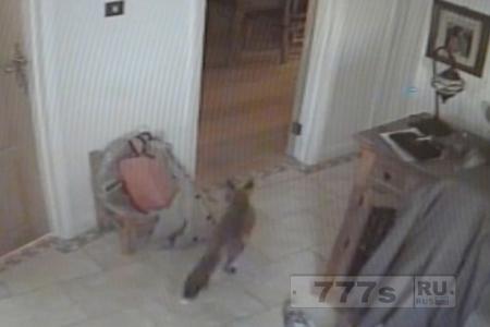 Хитрая лиса пробирается в дом и крадет пульт управления от PlayStation у мальчика