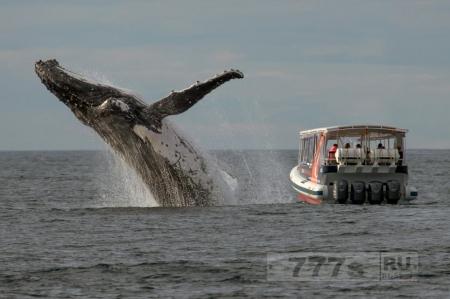 Любители посмотреть на китов пропустили фантастическую сцену, смотрели в другую сторону