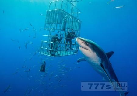 Это самая большая акула когда-либо сфотографированная