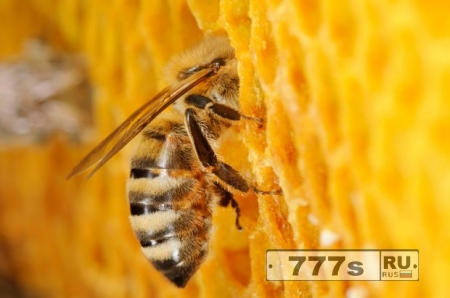 Пчелы становятся просто очаровательными, когда им становится немного жарко