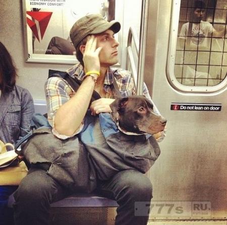 Почему люди таскают своих собак в сумках и мешках?
