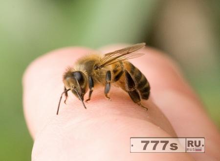 Здоровье: укусы пчел и ос
