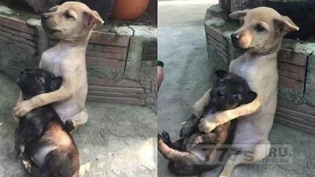 Симпатичный щенок не может не обнимать своего маленького друга даже после того как их забрали с улицы