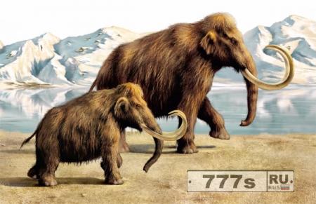 Наука: совместный российско-корейский проект по клонированию мамонта