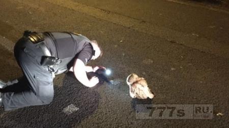 Непослушную сову чуть не арестовала полиция за отказ двигаться