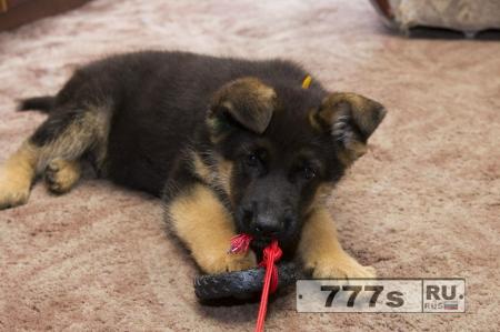 Живой уголок: как следует выбирать щенка