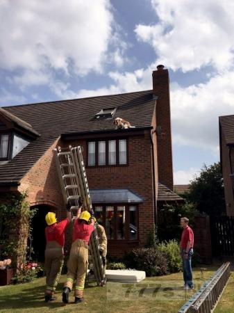 Спаниеля спасли после того, как он застрял на крыше дома