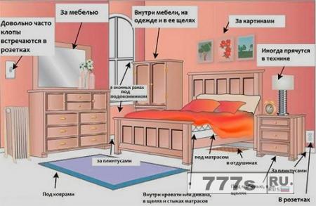 Здоровье: коричневые следы на кровати и раздражение на коже