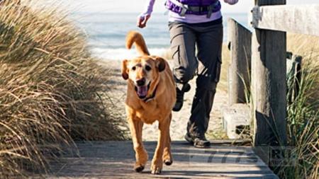 Исследование показало, что домашние животные благотворно влияют на ваше здоровье