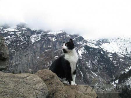 Мужчине, который вывихнул лодыжку и заблудился в Альпах, помогла загадочная кошка