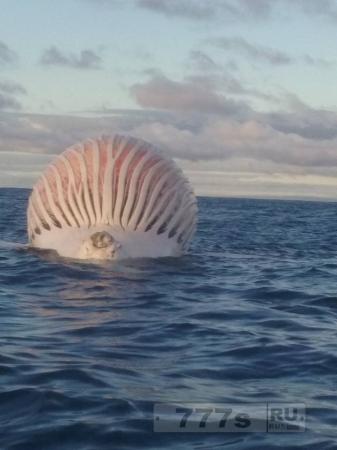 Интересно: туша кита была принята за корабль пришельцев.