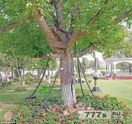Дерево, прикованное в Пакистане с 1898 года пьяным британским офицером