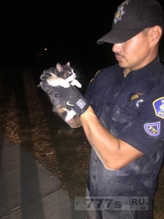 Полицейские спасли котенка частично съеденным буррито
