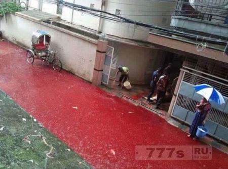 «Реки крови» на дорогах столицы Банглaдеш после жертвоприношения животных на Курбан байрам