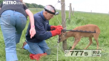 Олень запутался в электрическом заборе, и его пришлось освобождать спасателям