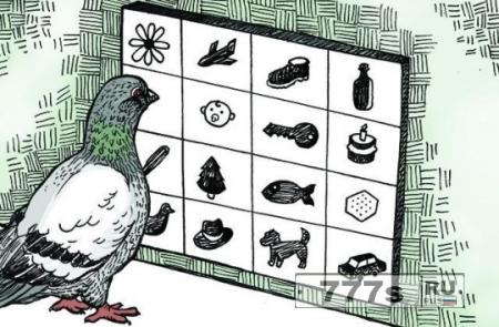 Оказывается, голуби могут читать