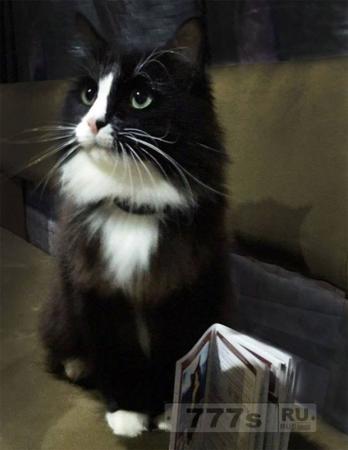 Звезда шоу о пропаже кота сам пропадает без вести