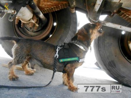 Небольшая собака спасает жизнь мигранта запертого в конфискованном автомобиле