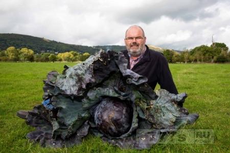 Посмотрите, какую огромную капусту вырастил Дейв