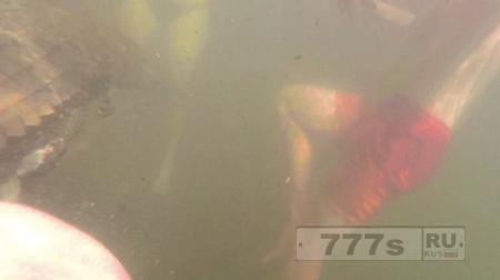 Подводная съемка запечатлела напряженный момент, когда мальчика укусил крокодил