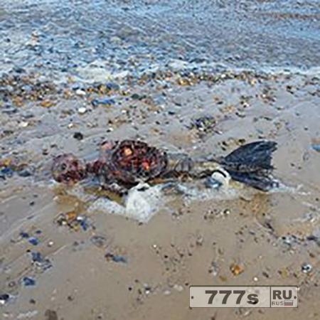 Мужчина утверждает, что нашел останки русалки, выброшенные морем на пляж в Норфолке
