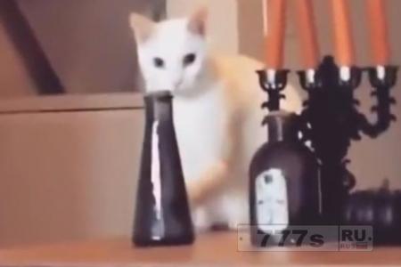 Кот пытается скинуть вазу на пол, но быстро ставит её на место, когда замечает хозяина