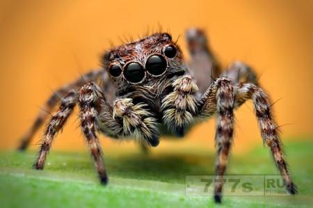 Ужасающее исследование показало, пауки «слышут» вас на расстоянии