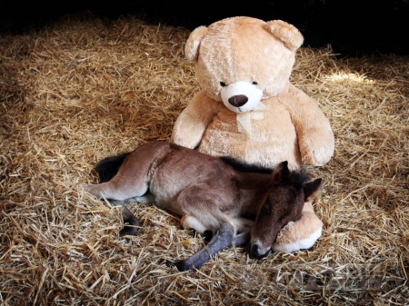 Жеребенок сирота Бриз спал и через три года продолжает спать с плюшевым мишкой