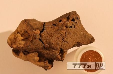 Наука: обнаружен мозг динозавра?