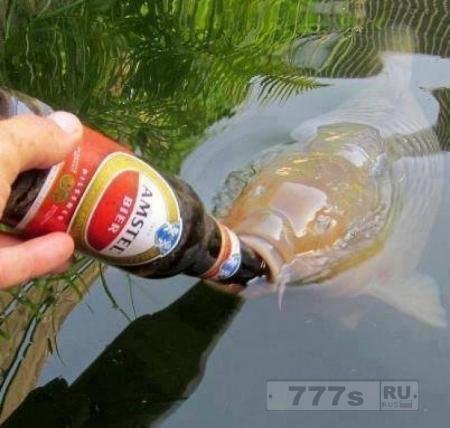 Интересно: пьют ли рыбы воду?