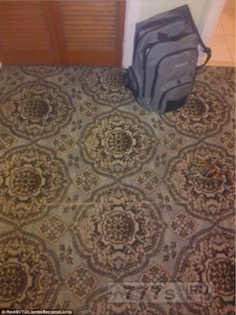 Сможете ли вы найти черепаху на узорном ковре?