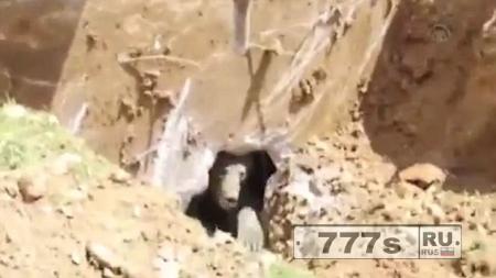 Рабочие в Турции, разбивая бетон, натолкнулись на неожиданно страшное существо