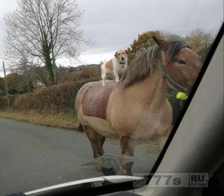 Ничто особенного - просто собака верхом на лошади