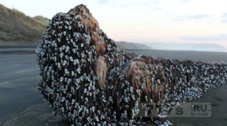 Чудо-Юдо морское выбросили волны на берег Новой Зеландии