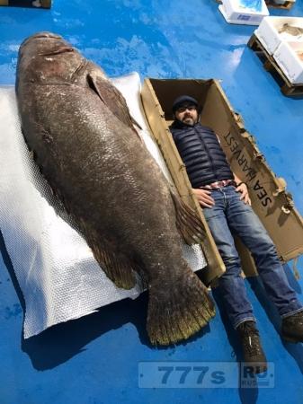 Самый большой из когда-либо пойманных морской окунь весом 190 кг