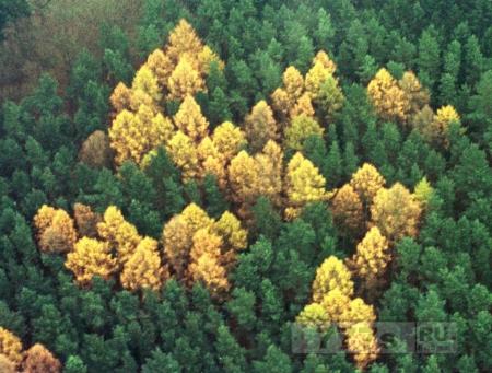 Укоренившийся нацизм в немецком лесу