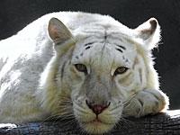 Наука: ученые создают базу ДНК вымирающих животных