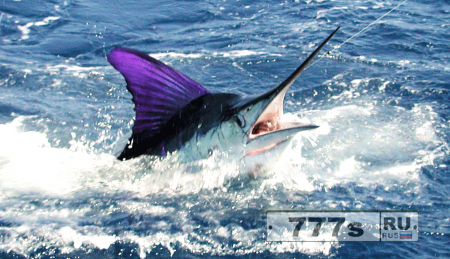 Унесенный рыбой