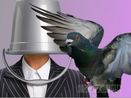 Мужчина с ведром на голове ворвался в магазин, чтобы украсть дорогих голубей.
