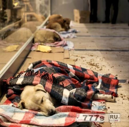 Волонтеры в Турции кутают бродячих собак в одеяла, чтобы они не мерзли.