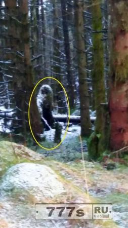 Это жуткая фотография «снежного человека» или это деревья?