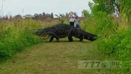 С ума сойти, да это же динозавр!