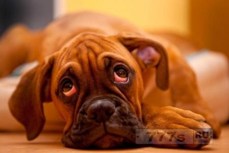 Депрессия, оказывается, бывает и у собак и кошек.