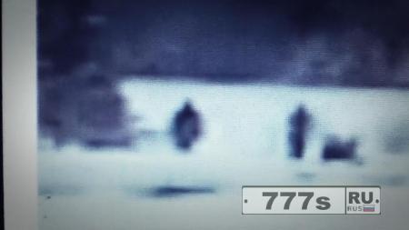 Очень плохие кадры веб-камеры показывают «семью из шести Йети» в парке Йеллоустоун.