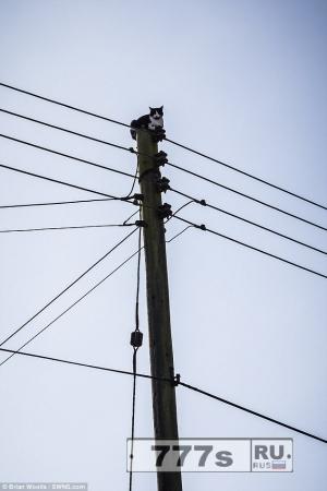 Незадачливую кошку спасли после того, как она застряла наверху 9 метрового электростолба.